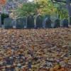 Mount Auburn Cemetery, Cambridge, Massachusetts, 2007