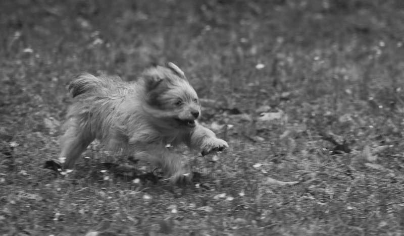 Rosie as a puppy, March 2012