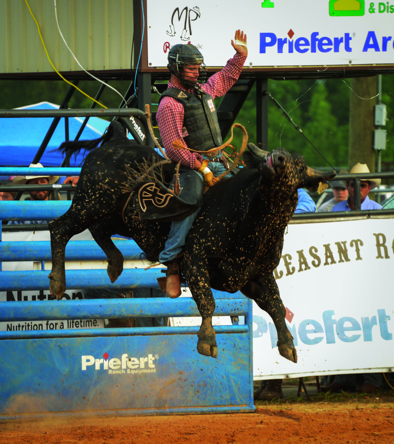 Rodeo, Mount Pleasant, May 2015